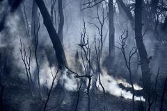 Οι πυροσβέστες έλεγξαν την φωτιά και την έσβησαν στην περιοχή Αφίδνες, Κρυονέρι και άγιο στέφανο. Βαρύς ο απολογισμός με καμμένα σπίτια και δασικές εκτάσεις